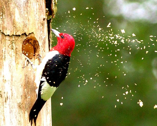 CAREER LESSONS I LEARNED FROM A WOODPECKER